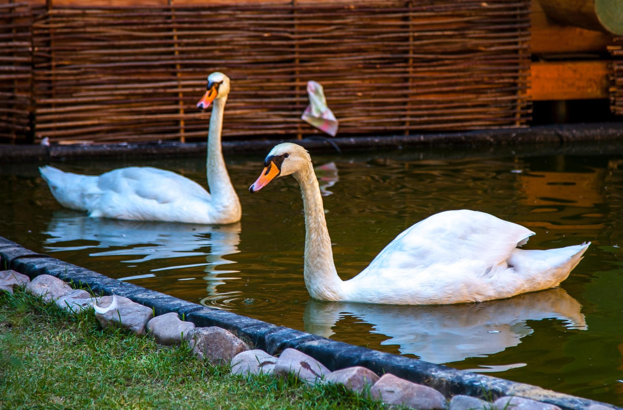Зоопарк в парке Толстого в Химках