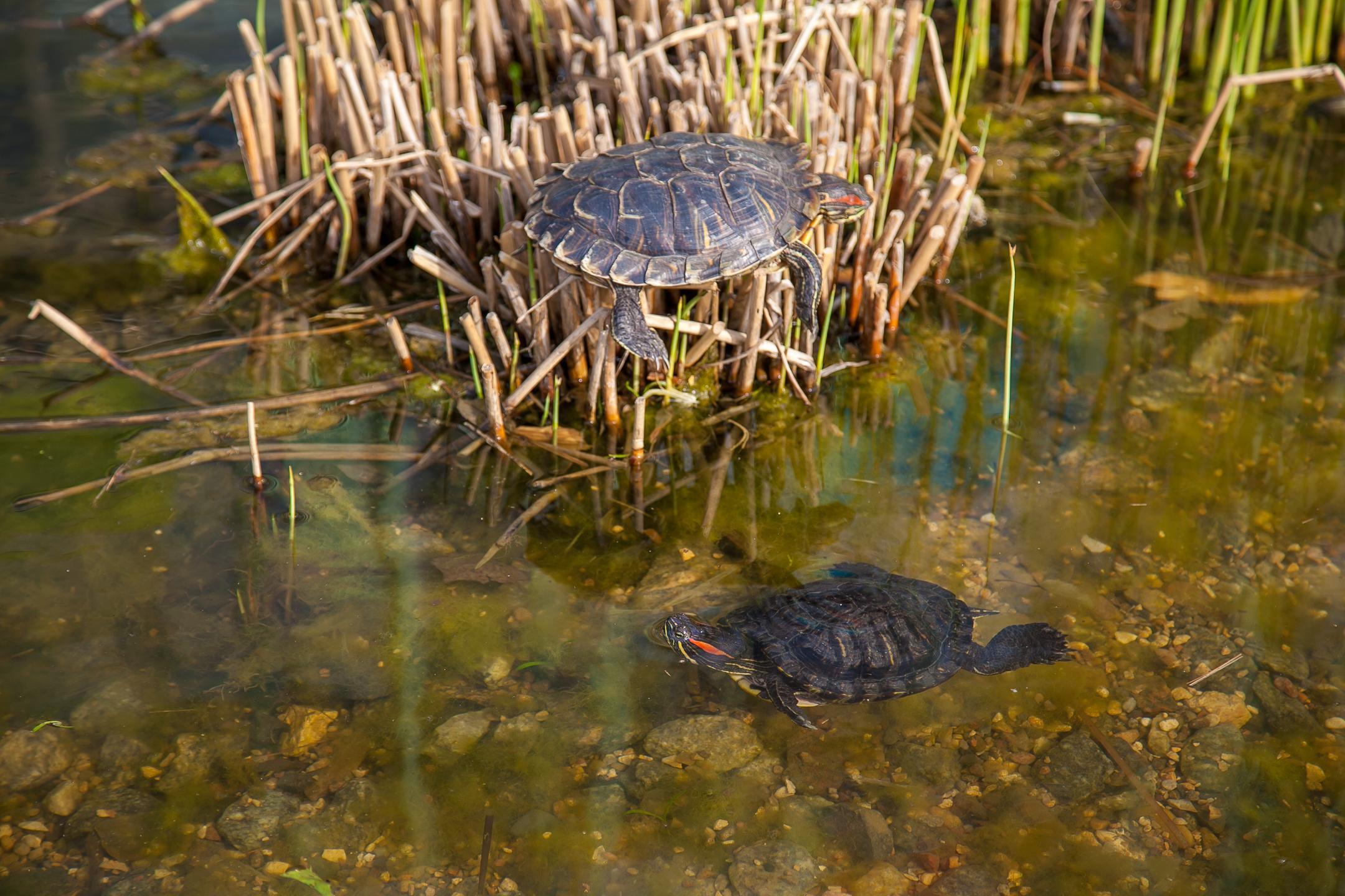 Черепахи в «Аптекарском огороде»