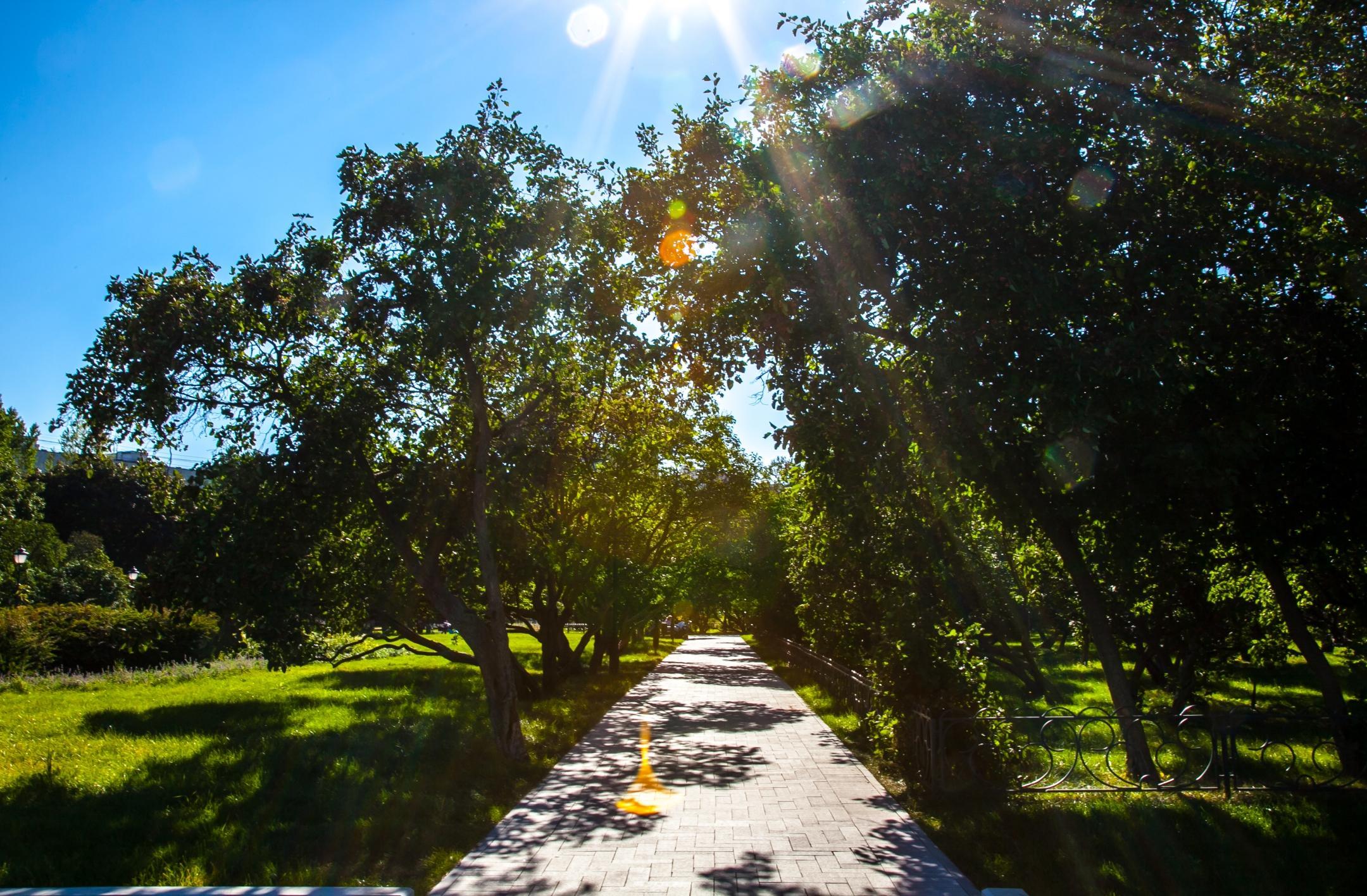 Аллея в Сиреневом саду