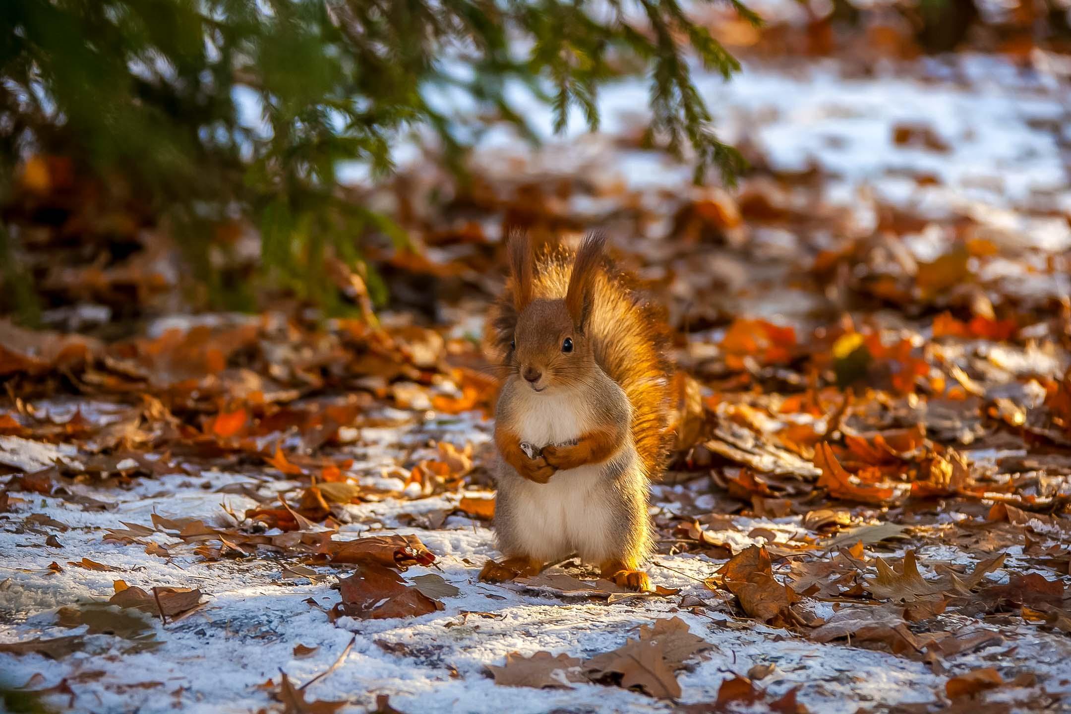 Бельчатник в Перовском парке