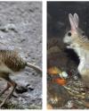 Тушканчики из Московского зоопарка впали в зимнюю спячку