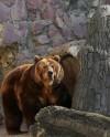 Медведи проснулись в Московском зоопарке