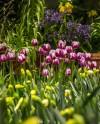 Фестиваль тюльпанов пройдет на Елагином острове