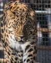 Московский зоопарк отмечает 157-летие