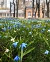 Воронцовский парк приготовил для подписчиков культурные и творческие видеоуроки
