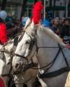 В Александровском парке устроят парад трамваев