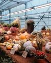 Выставка «Краски осени» в «Аптекарском огороде» до 20 октября