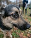 В парке «Садовники» пройдет выставка-пристройство собак из приюта