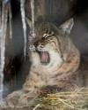 Московский зоопарк приглашает на вечерние прогулки