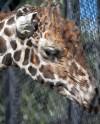 Московский зоопарк снизил стоимость билетов