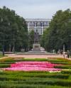 360 вязов вырубят в Московском парке Победы
