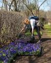 Четыре московских парка приглашают на цветочный своп
