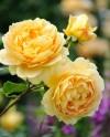 Выставки цветов в Ботаническом саду МГУ