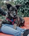 В столичных парках проведут бесплатные консультации ветеринаров