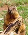 Зима близко: в Московском зоопарке сурки впали в зимнюю спячку
