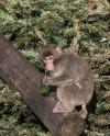 Московский зоопарк вручает бесплатные билеты за полезные подарки для животных