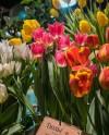 Выставку «Репетиция весны» в «Аптекарском огороде» откроют концертом Шопена и Шуберта