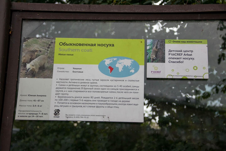 Обыкновенная носуха, Московский зоопарк, Москва — ParkSeason