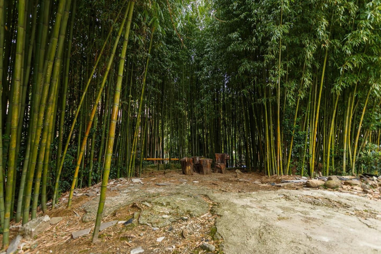 Бамбуковая роща — ParkSeason