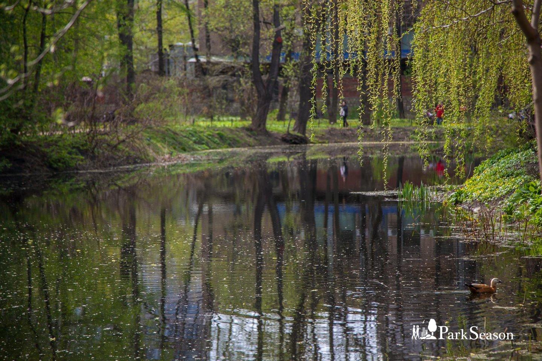 Старинный пруд, Аптекарский огород, Москва — ParkSeason
