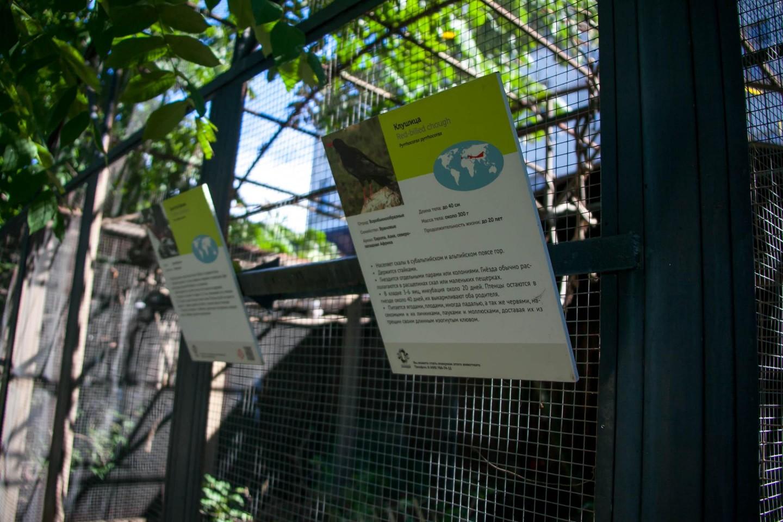 Клушица, Московский зоопарк, Москва — ParkSeason