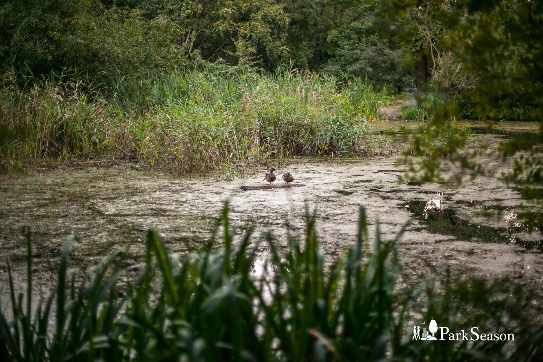 Река Лихоборка — ParkSeason