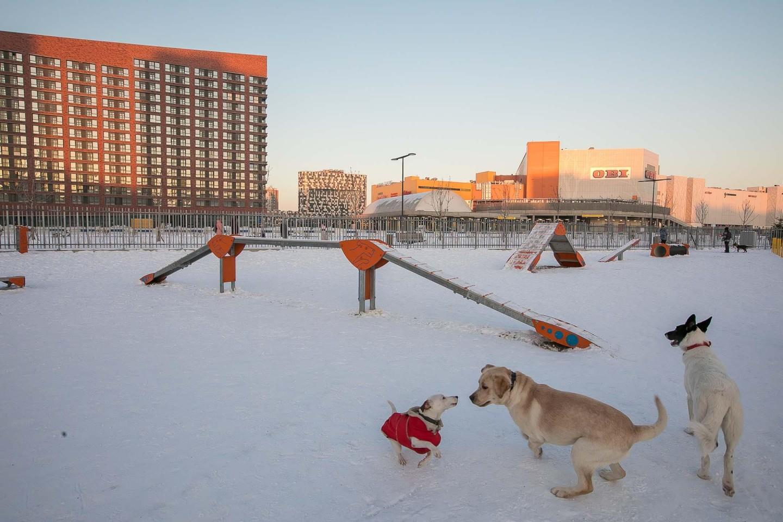 Площадка для выгула собак, Ходынское поле, Москва — ParkSeason