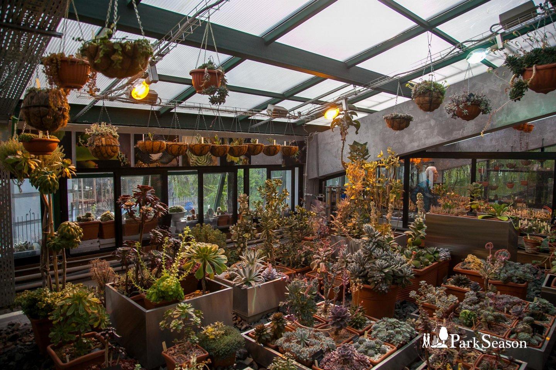 Пальмовая оранжерея, Аптекарский огород, Москва — ParkSeason