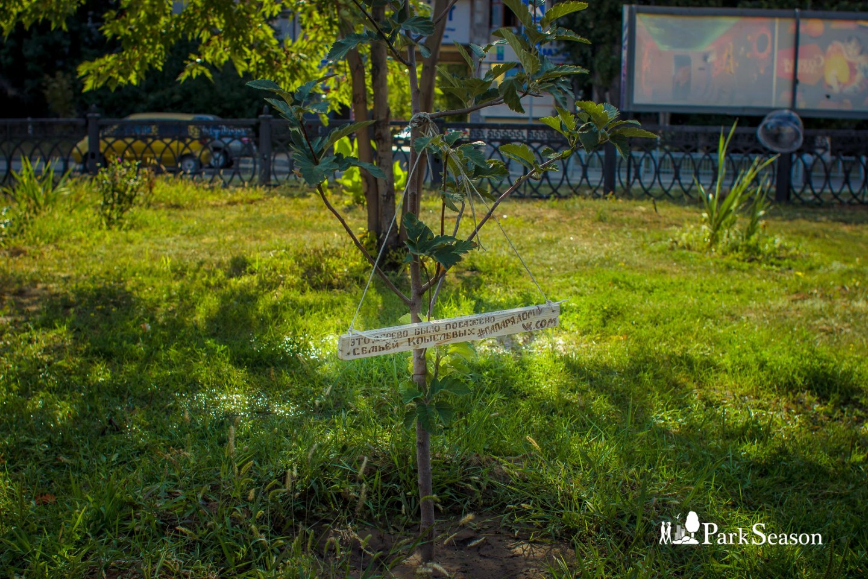 Папино дерево — ParkSeason