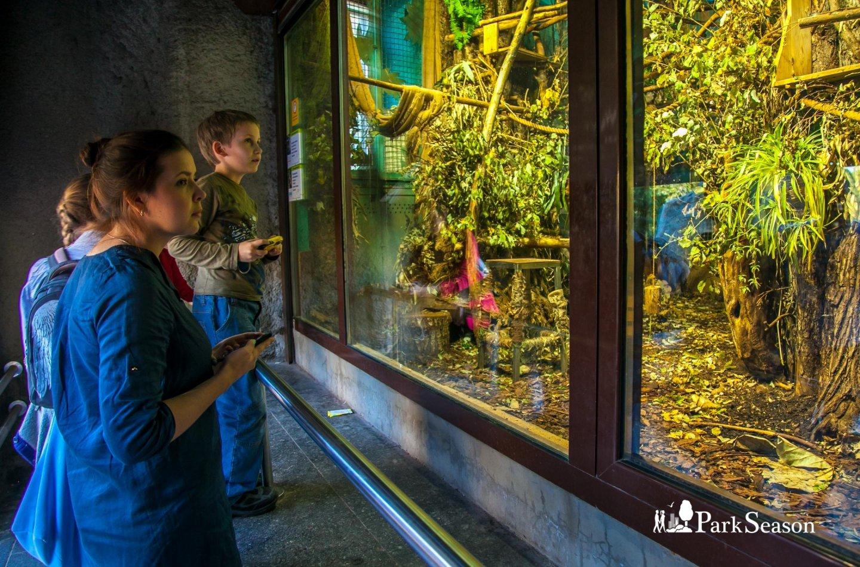 Двупалый ленивец, Московский зоопарк, Москва — ParkSeason