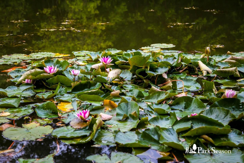 Большой Олений пруд, Парк «Сокольники», Москва — ParkSeason