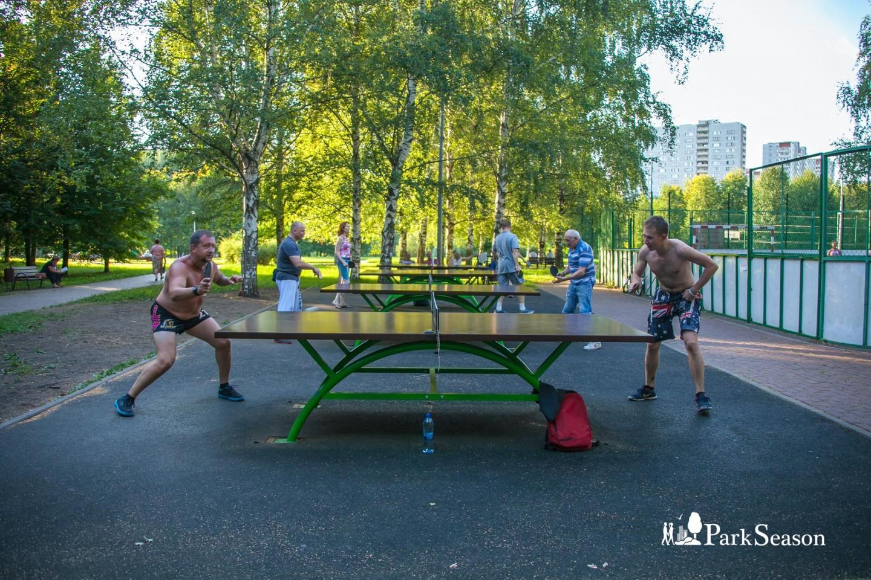 Настольный теннис — ParkSeason