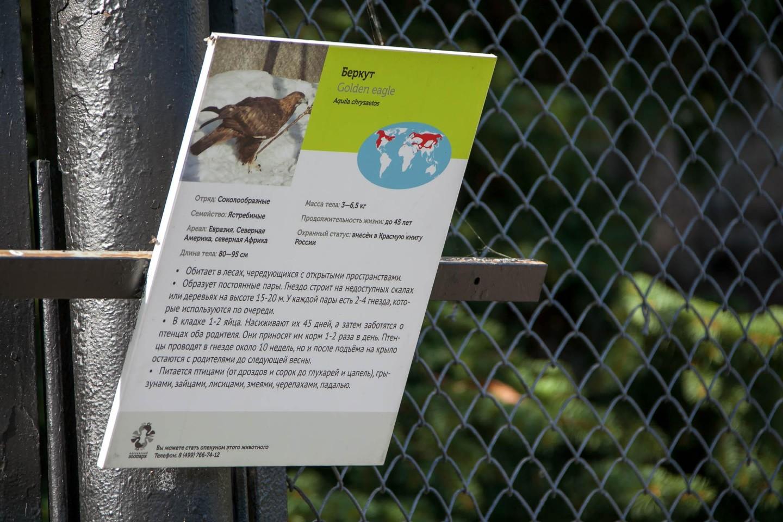 Беркут, Московский зоопарк, Москва — ParkSeason