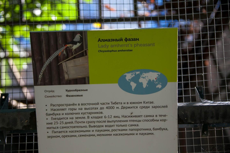 Алмазный фазан, Московский зоопарк, Москва — ParkSeason
