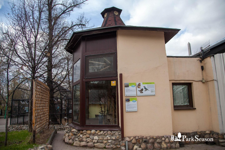 Вьюрковые птицы, Московский зоопарк, Москва — ParkSeason