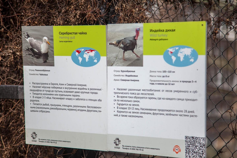Индейка дикая, Московский зоопарк, Москва — ParkSeason