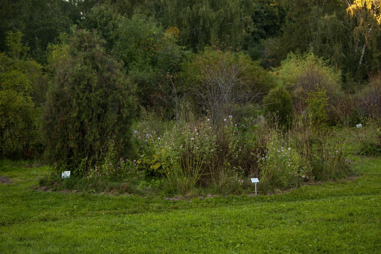 Растения природной флоры — ParkSeason