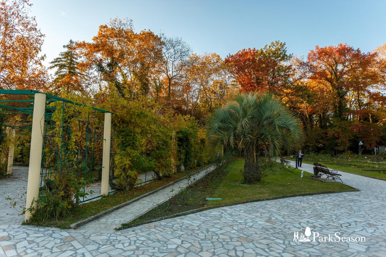Арка, увитая растениями — ParkSeason
