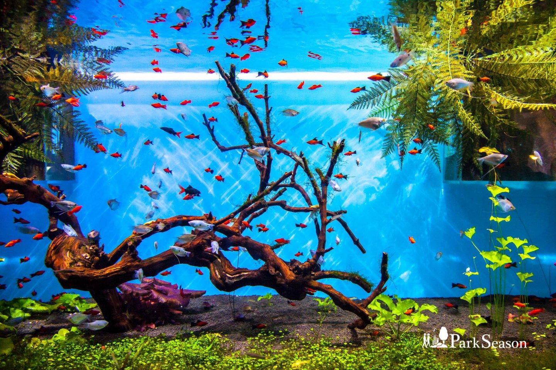 Океанариум «Москвариум» — ParkSeason