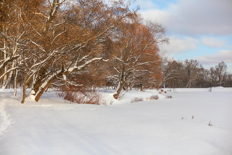 Сад прибрежных растений — ParkSeason
