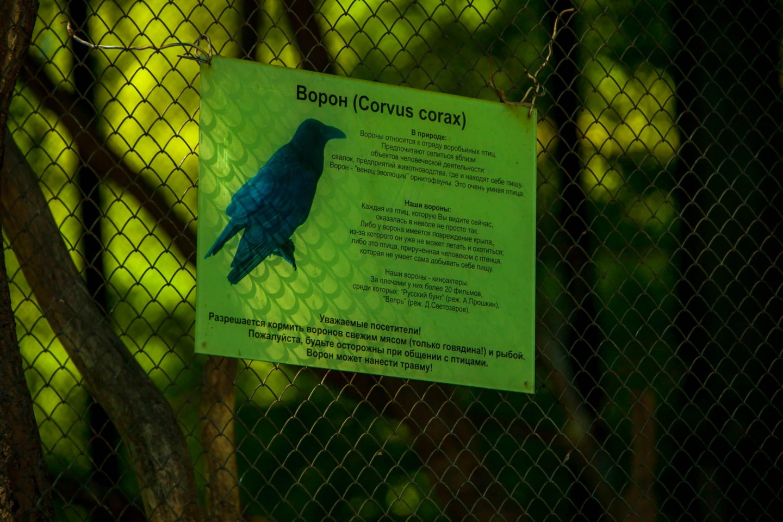 Клетка с воронами — ParkSeason