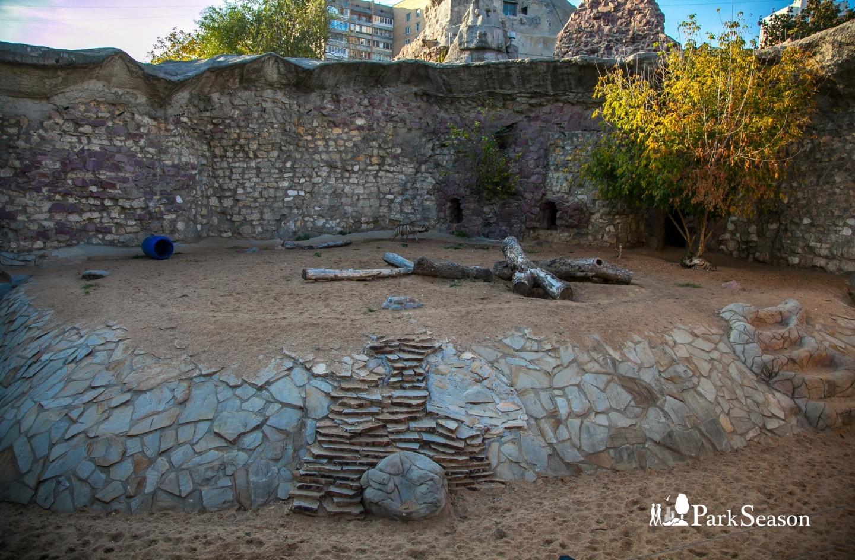 Полосатая гиена, Московский зоопарк, Москва — ParkSeason