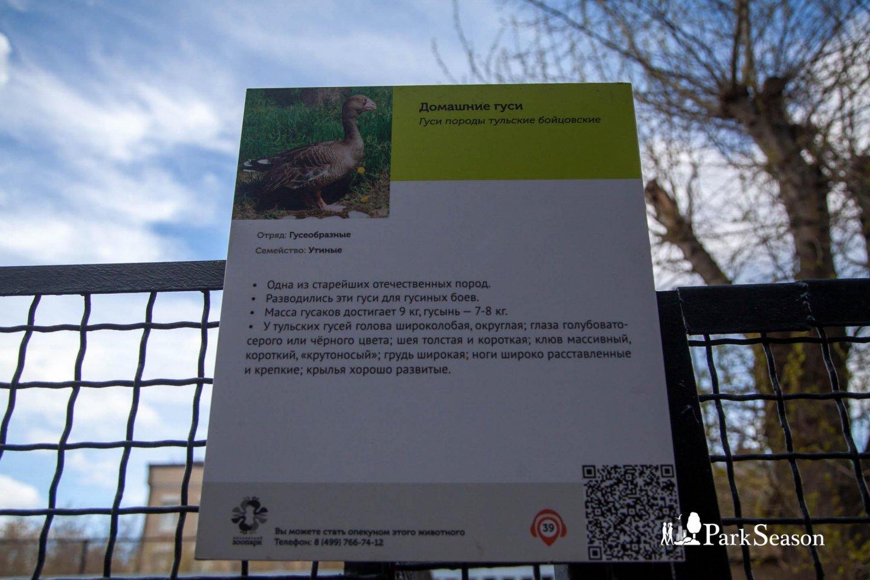 Контактный зоопарк, Московский зоопарк, Москва — ParkSeason