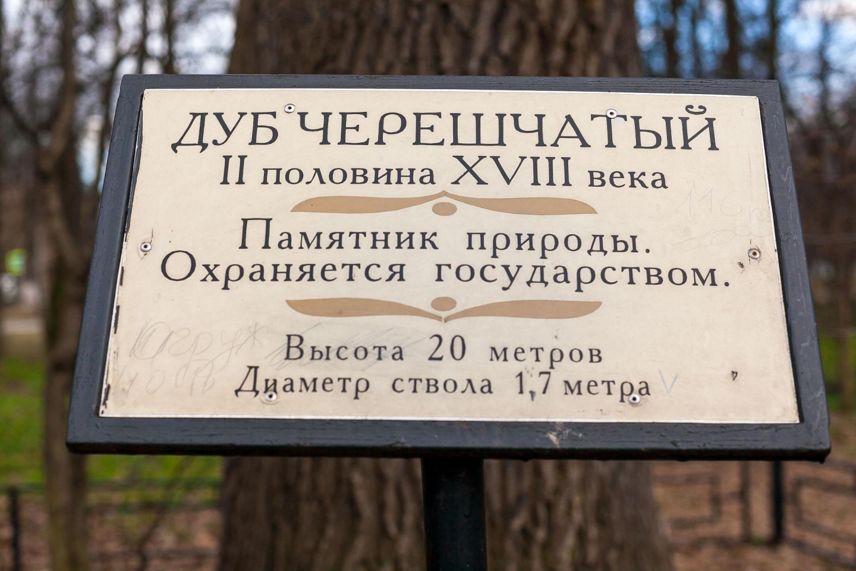 Дуб черешчатый II половина XVIII в, Парк «Кузьминки», Москва — ParkSeason