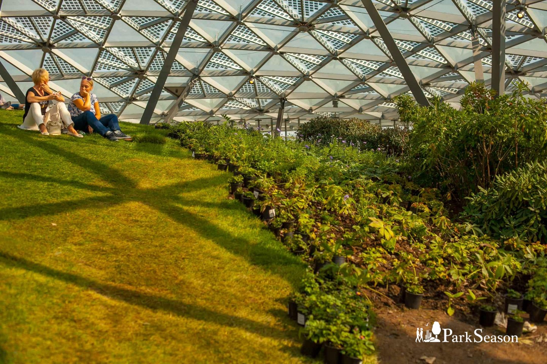 Стеклянная кора, Парк «Зарядье», Москва — ParkSeason