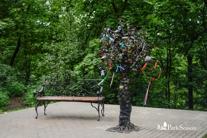 Дерево желаний, Парк «Фили», Москва — ParkSeason