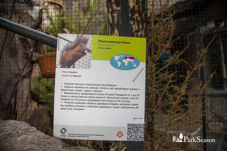 Белка, Московский зоопарк, Москва — ParkSeason