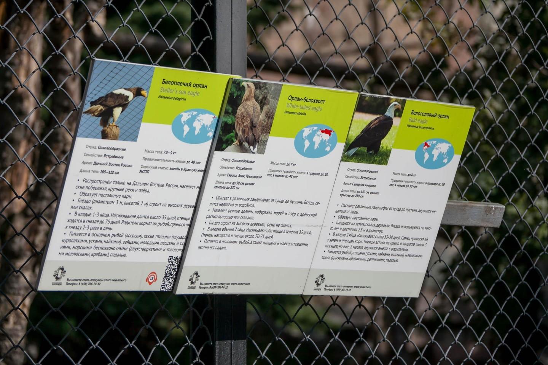 Белоголовый орлан, Московский зоопарк, Москва — ParkSeason