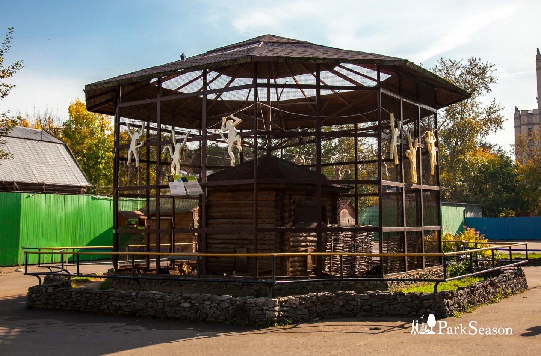 Бриллиантовая горлица, Московский зоопарк, Москва — ParkSeason