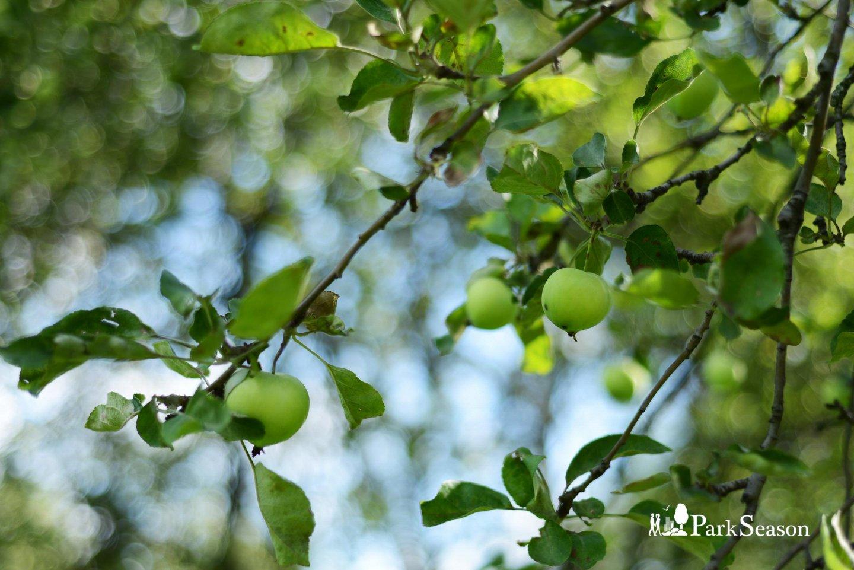 Яблоневый сад, Усадьба «Коломенское», Москва — ParkSeason